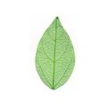 Natural leafCGHM271