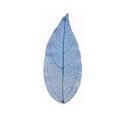 Natural leafCGHM272