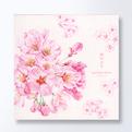 桜 便箋CGLP122